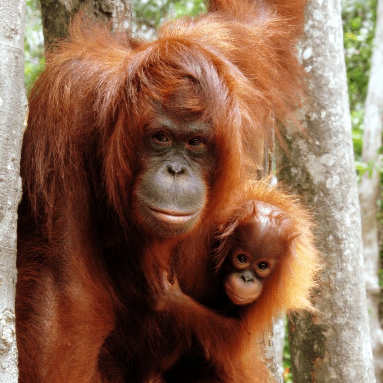 Expedition Sumatra - Scott Millar