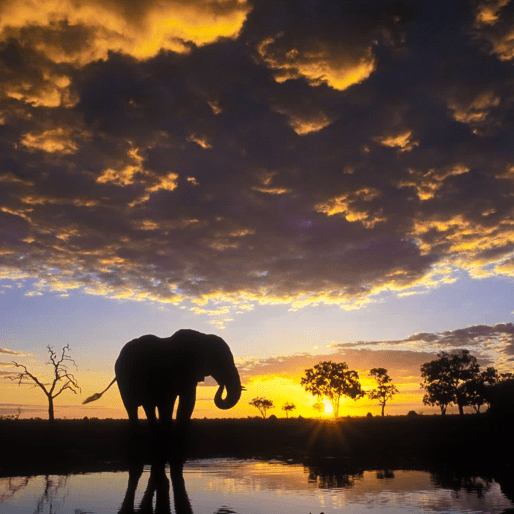 World Challenge Botswana 2020 - Angus Heggs