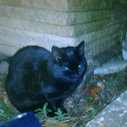 Stalybridge Feline Care