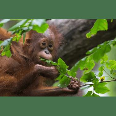 Camps International Borneo 2020 - Melissa Wing