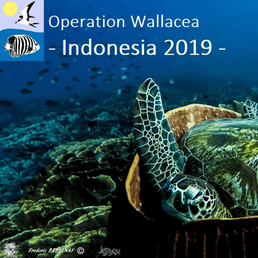 Operation Wallacea Indonesia 2019 - Jade Bessenay