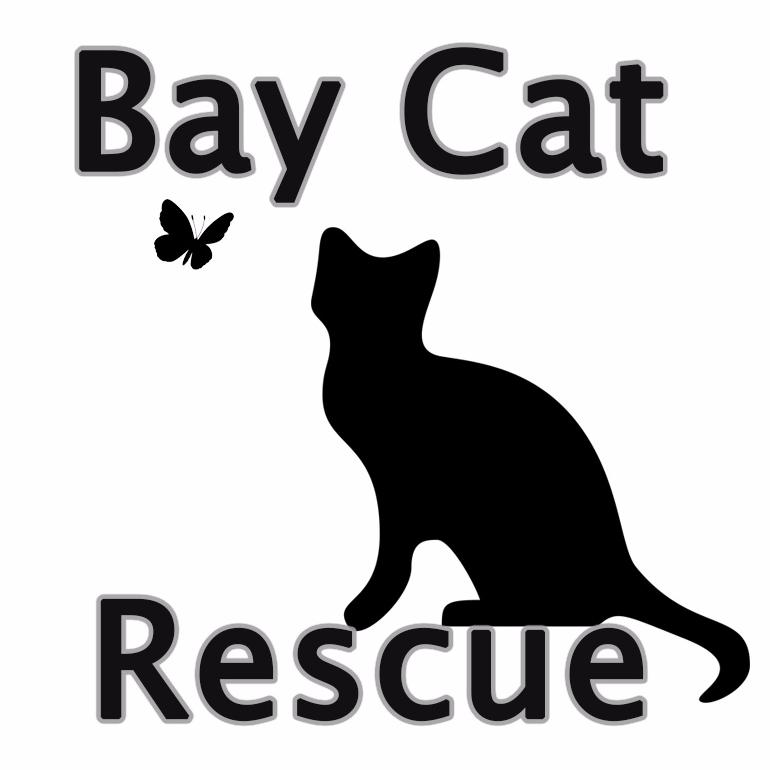 Bay Cat Rescue