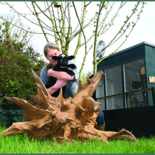 Animal Aid Guernsey