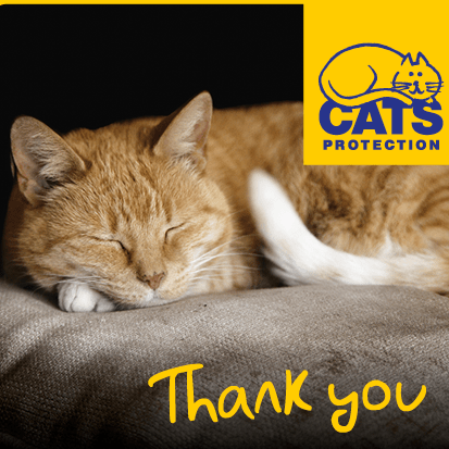 Cats Protection Ipswich