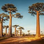 World Challenge Madagascar 2019 - Jay Hope