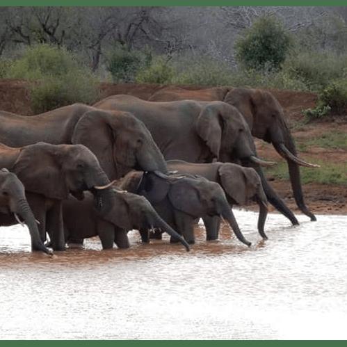 Camps International Tanzania 2018 - Nathan Williams