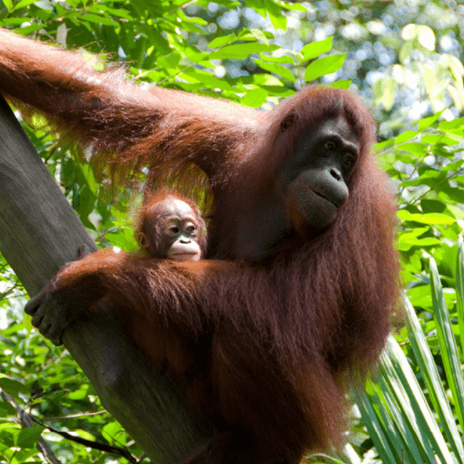 Camps International Borneo - Ben Long