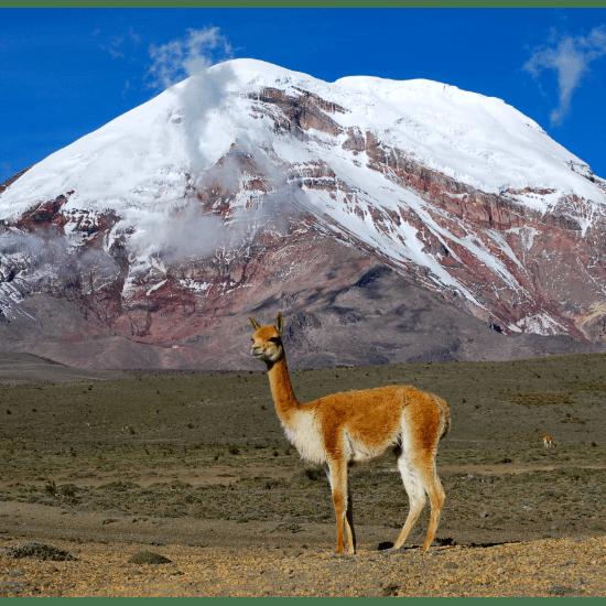True Adventure Ecuador 2019 - Richard Moore