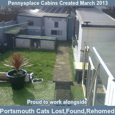 Portsmouth Cats - Lost Found and Rehomed