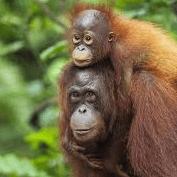 World Challenge Borneo and Malaysia 2019 - Teresa Doran
