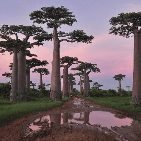 Outlook Expeditions Madagascar 2017 - Matthew Schofield