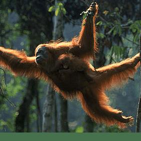 Camps International Borneo 2019 - Sam Baker