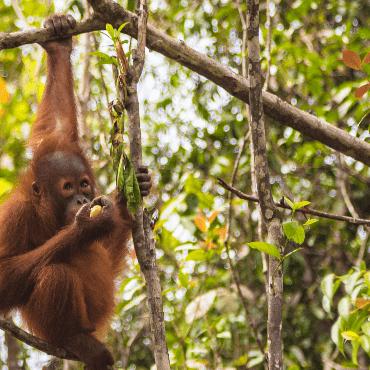 World Challenge Borneo 2021 - Katie Pile