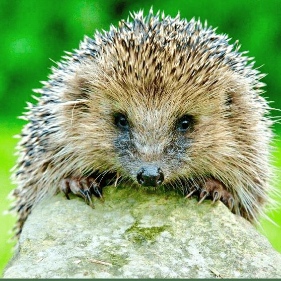 The Wildlife Orphanage and Hedgehog Hospital - Barlby