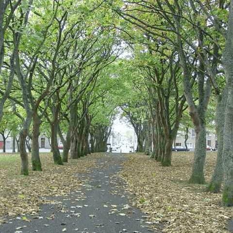 Argyle Square Area Association