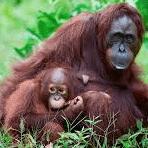 Borneo 2021 - Lily Phillips
