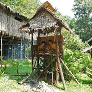Borneo 2021 - Elizabeth Edmeades