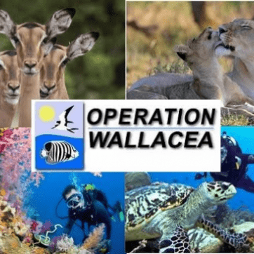 Operation Wallacea Honduras 2021 - Joshua Child