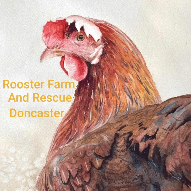 Rooster Farm and Rescue Doncaster
