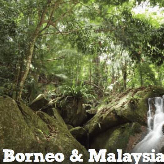 World Challenge Malaysia and Borneo 2020 - Alishia Lashkari