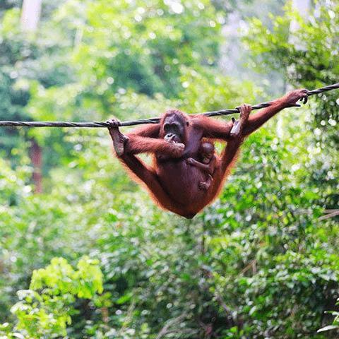 Borneo 2020 - Yoanna Dukanova