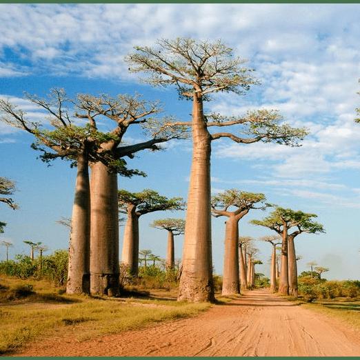 World Challenge Madagascar 2021 - Daniel Blades