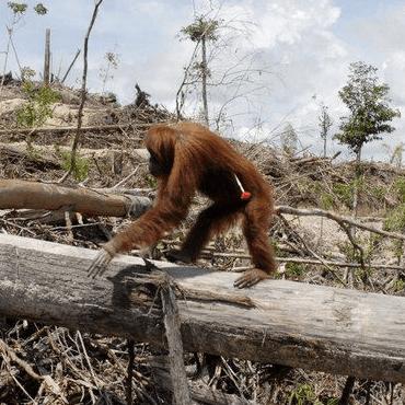 Borneo 2020 - Will Doble Thomson