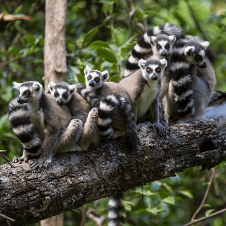 Far Frontiers Madagascar 2017 - Amber Edirisinghe