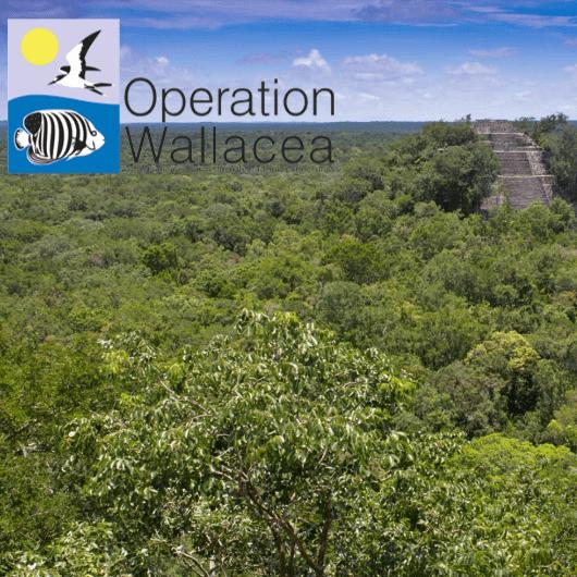 Operation Wallacea Mexico 2017 - Megan Warren