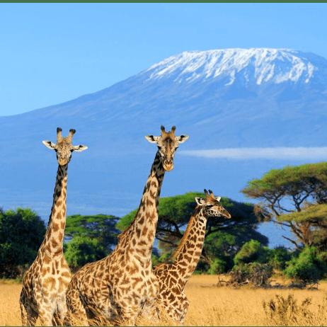 Camps International Kenya 2020 - Dylan James