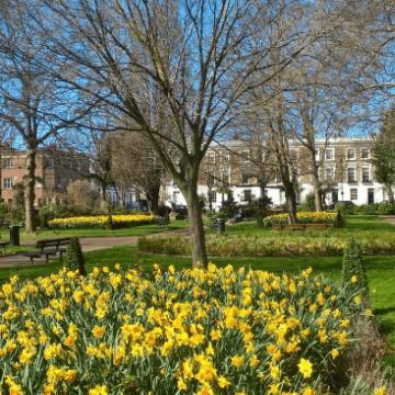 Arlington Square Gardens Appeal