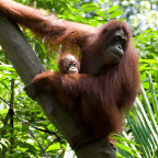 Borneo 2020 - Samuel Nixon