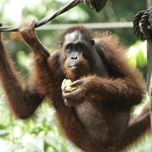 World Challenge  Borneo 2019 - Olivia Roberts
