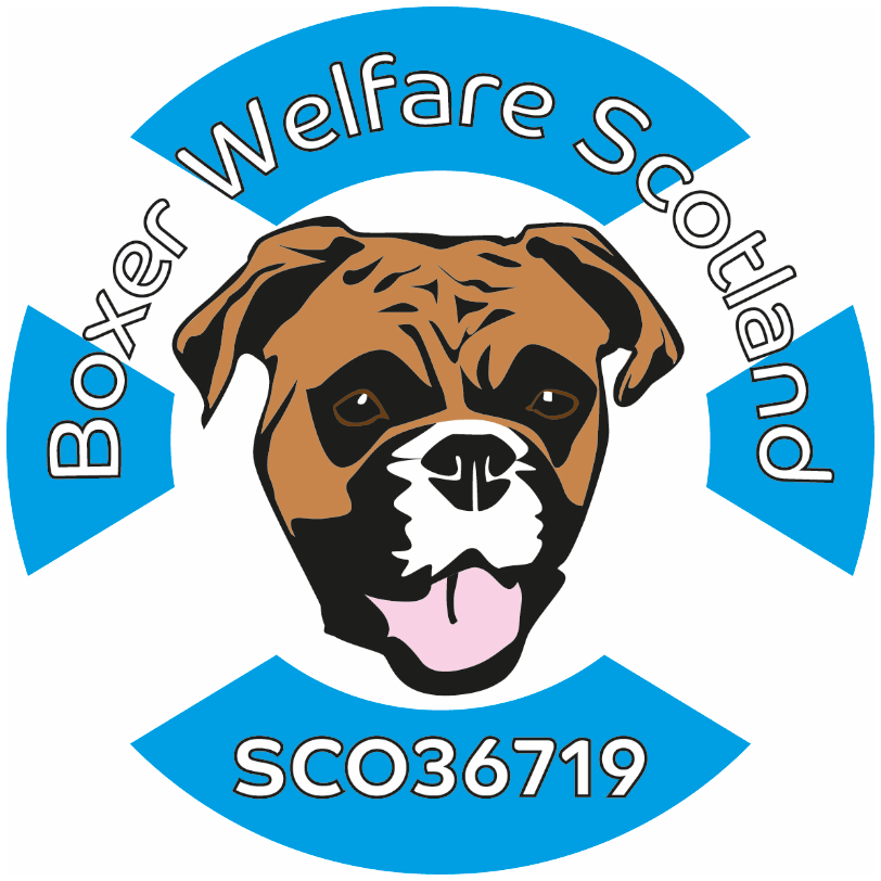 Boxer Welfare Scotland