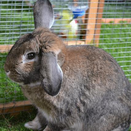All Ears Rabbit Rescue