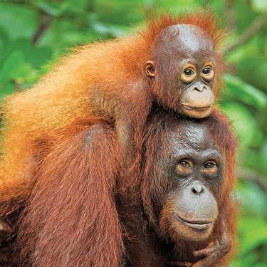 World Challenge Borneo 2020 - Lucy Secker