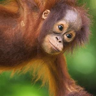 Borneo 2020 - Elizabeth Abbott