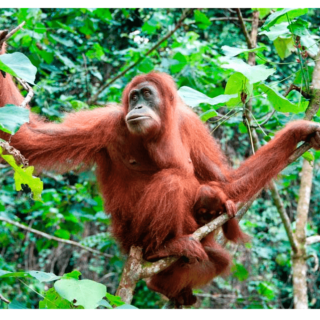 Outlook Expeditions Borneo 2018 - Ruben Slater