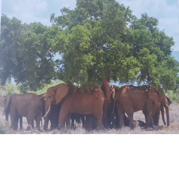 Camps International Kenya 2021 - Keyara Sutherland
