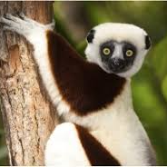 Sifaka Research Project Madagascar - 2021 - Louise Cooper