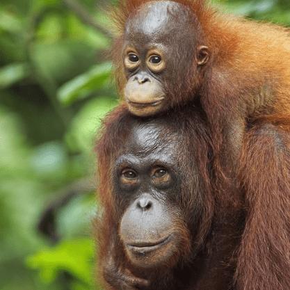 True Adventure Borneo 2020 - Kaela Nelson