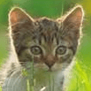 Cats Protection Central Aberdeen