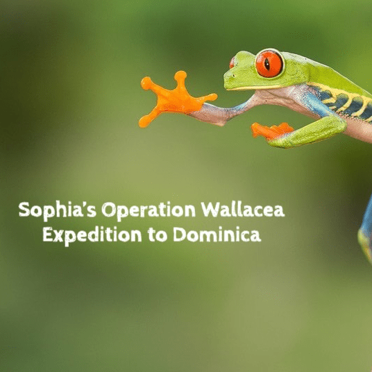 Operation Wallacea Dominica 2019 - Sophia Ferguson-Bunn