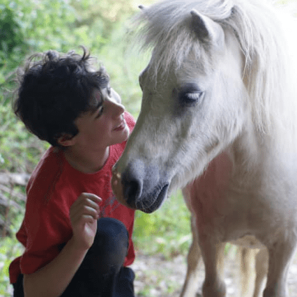 Elysian Animal Assisted Therapy and Learning CIC