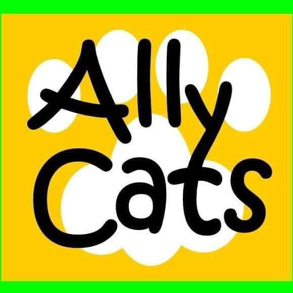 Ally Cats Rescue