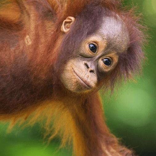 World Challenge Borneo 2021 - Saskia Blok
