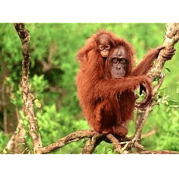 Outlook Expeditions Borneo 2021 - Michael Yu