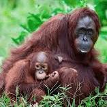 Borneo 2021 – Talia Allen