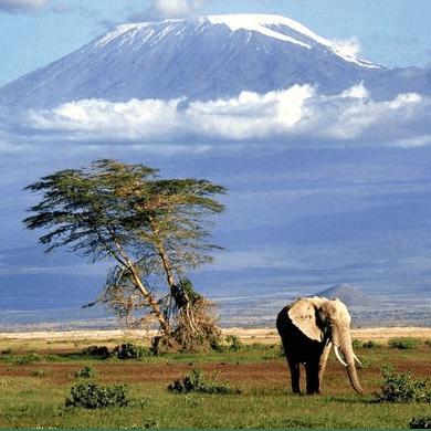 Camps International Tanzania 2020 - Louise Foxall