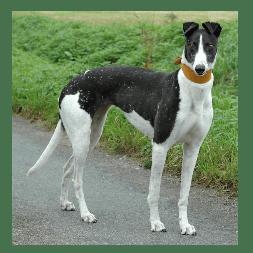 Yarmouth Greyhound Homefinders